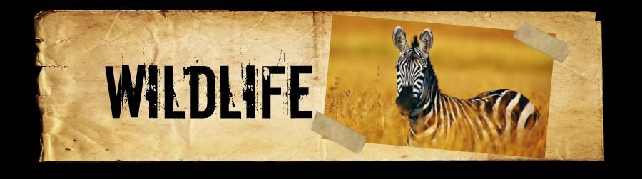 wildlife-banner
